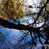 WEEK 110 - REFLECTION - CHRISTOPHER D. BENNETT