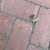 WEEK 118 - FLOWERS - STEPHANIE KIM