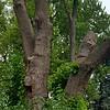 WEEK 152 - TREE - TAMARA PETERSON