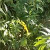 WEEK 205 - FLOWER - SHANNON BARDOLE-FOLEY