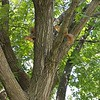 WEEK 196 - TREE - SHANNON BARDOLE=FOLEY