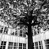 WEEK 196 - TREE - CHRISTOPHER D. BENNETT