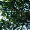 WEEK 196 - TREE