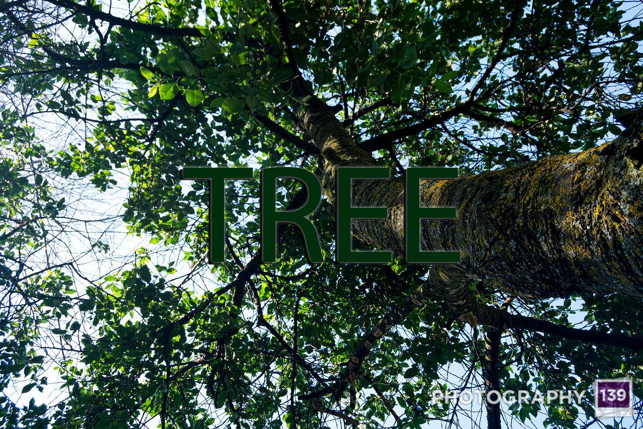 WEEK 198 - TREE