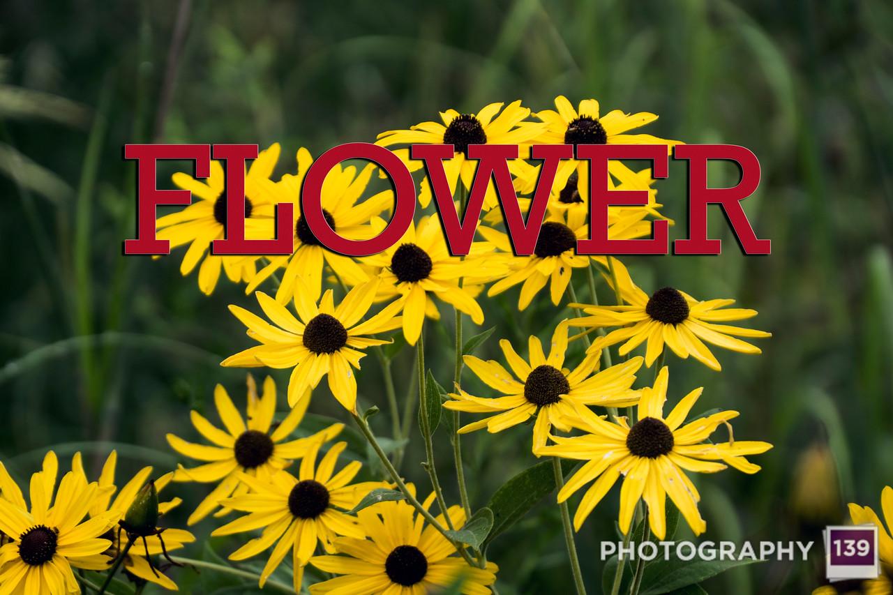 WEEK 205 - FLOWER