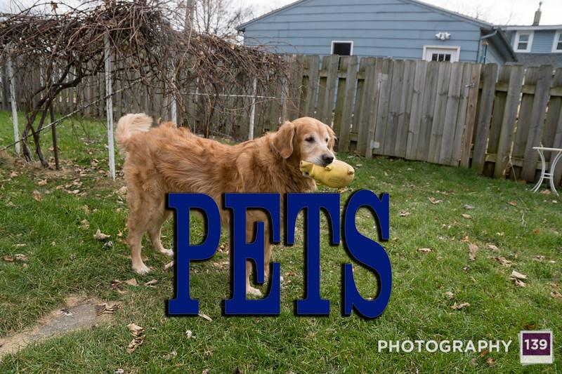 WEEK 166 - PETS