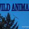 WEEK 164 - WILD ANIMAL