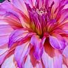 WEEK 205 - FLOWER - MONICA HENNING