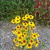 WEEK 205 - FLOWER - JODIE CUE