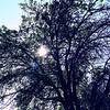 WEEK 196 - TREE - TAMARA PETERSON