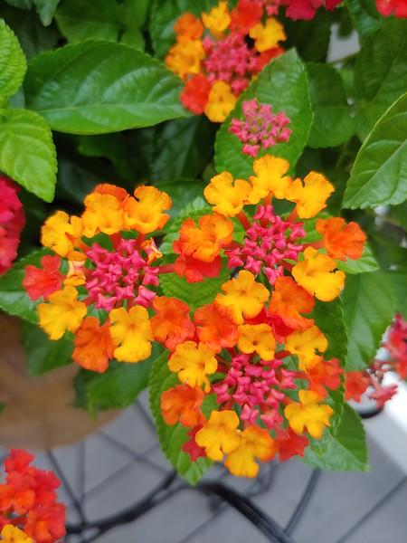 WEEK 205 - FLOWER - MICHELLE HAUPT