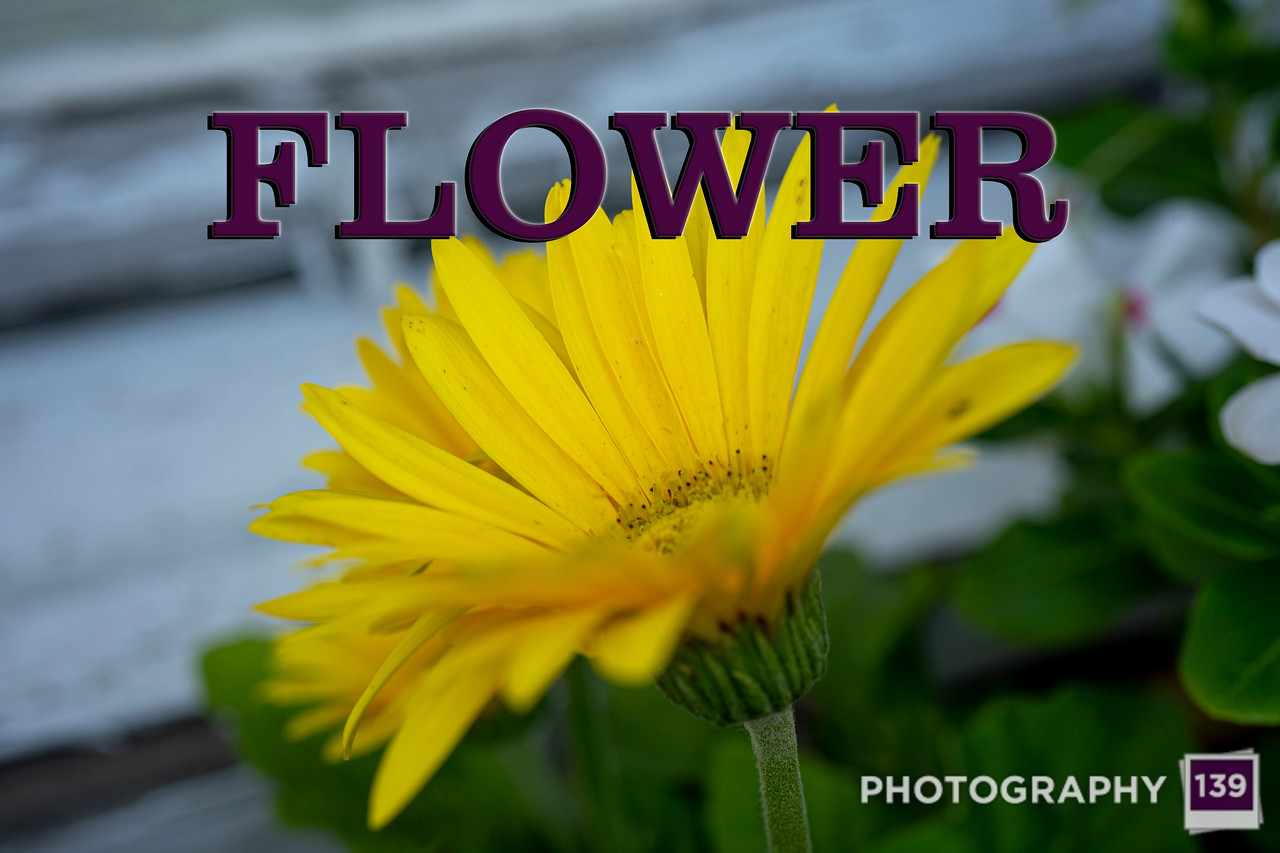 WEEK 259 - FLOWER