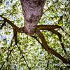WEEK 242 - TREE - CHRISTOPHER D. BENNETT