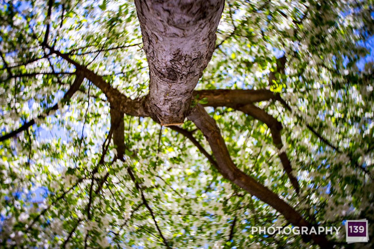 WEEK 242 - TREE - CHRISTOPHER D. BENNETT