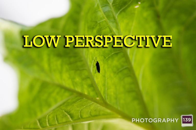 WEEK 213 - LOW PERSPECTIVE