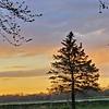 WEEK 242 - TREE - CARLA STENSLAND