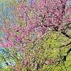 WEEK 242 - TREE - TAMARA PETERSON
