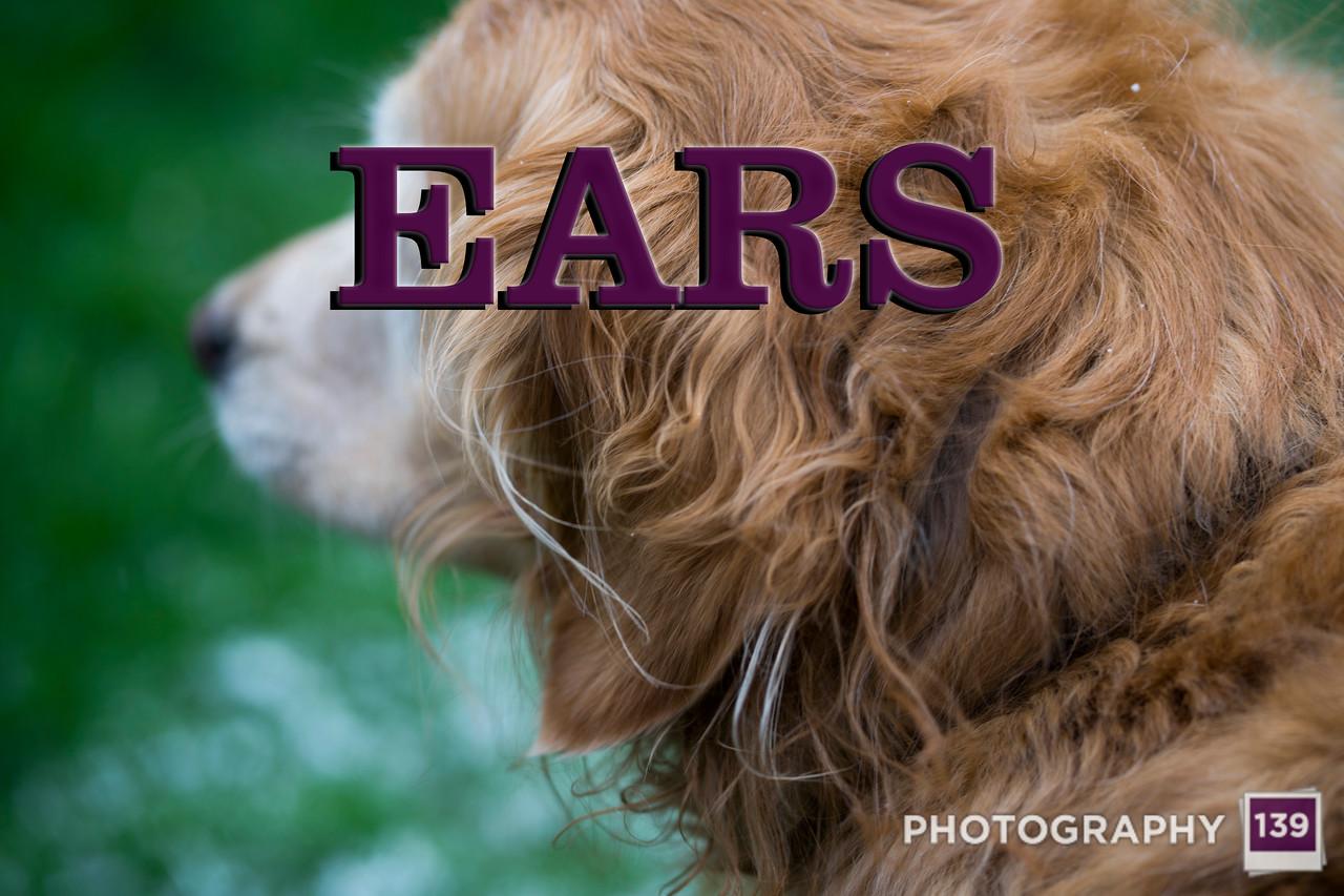 WEEK 240 - EARS