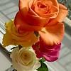 WEEK 259 - FLOWER - TAMARA PETERSON