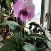 WEEK 259 - FLOWER - ELIZABETH NORDEEN