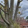 WEEK 242 - TREE - LAYLA GORSHE
