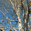 WEEK 242 - TREE - JEN ENSLEY-GORSHE