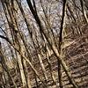 WEEK 242 - TREE - AARON BARNETT