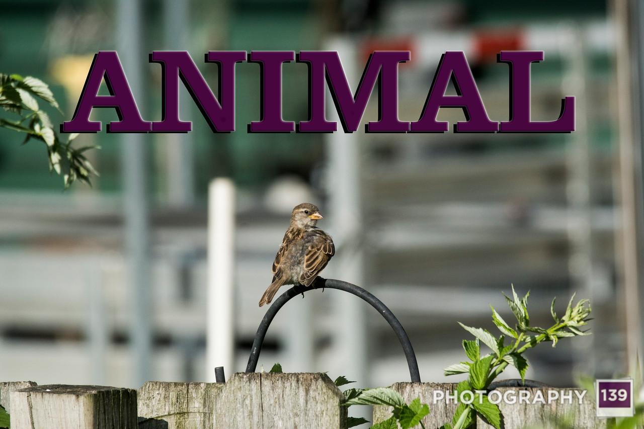 WEEK 254 - ANIMAL