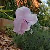WEEK 259 - FLOWER - SHANNON BAROLE-FOLEY
