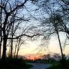 WEEK 242 - TREE - ELIZABETH NORDEEN