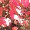 WEEK 217 - ORANGE - TAMARA PETERSON