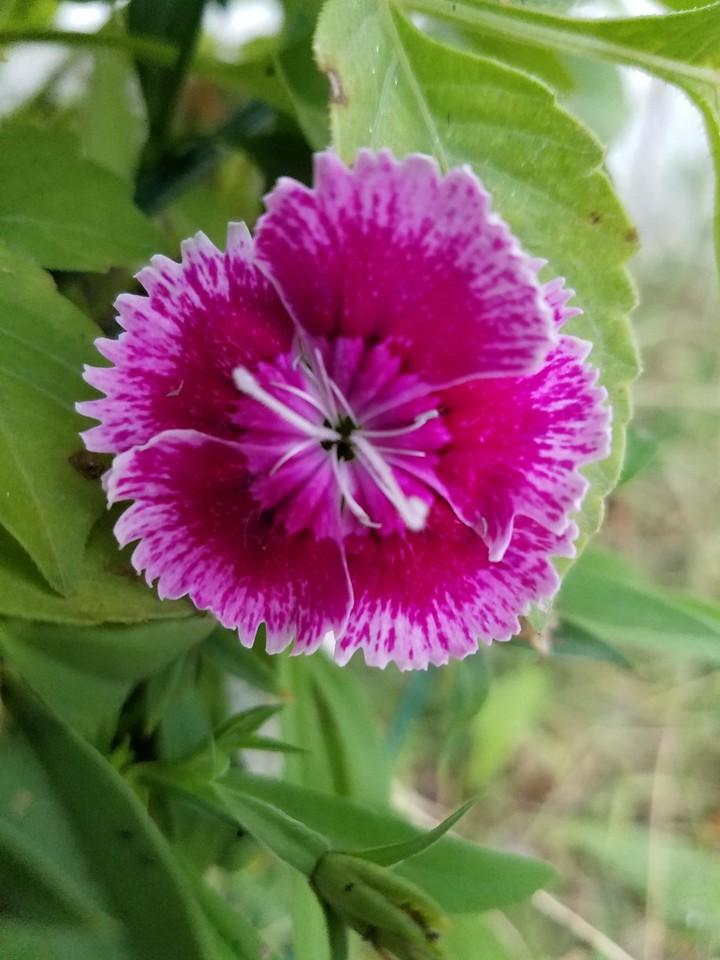 WEEK 316 - FLOWER - ELIZABETH NORDEEN