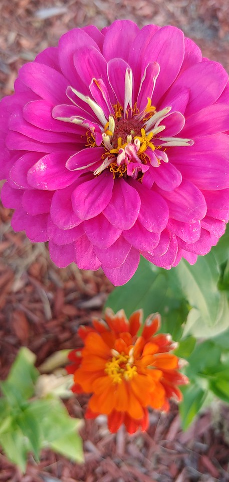WEEK 316 - FLOWER - MICHELLE HAUPT