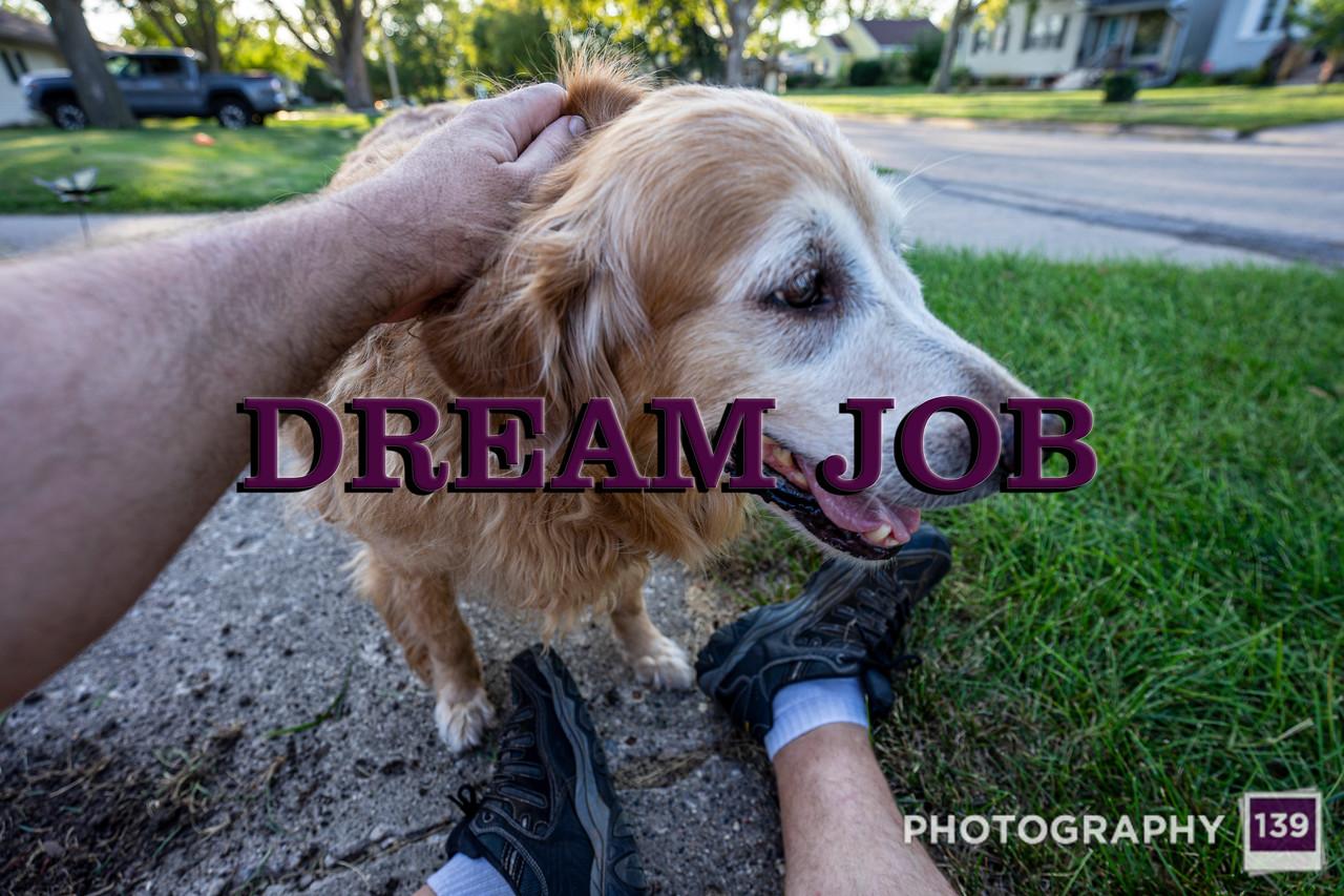 WEEK 315 - DREAM JOB