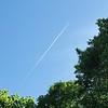 WEEK 298 - UP IN THE AIR - TAMARA PETERSON