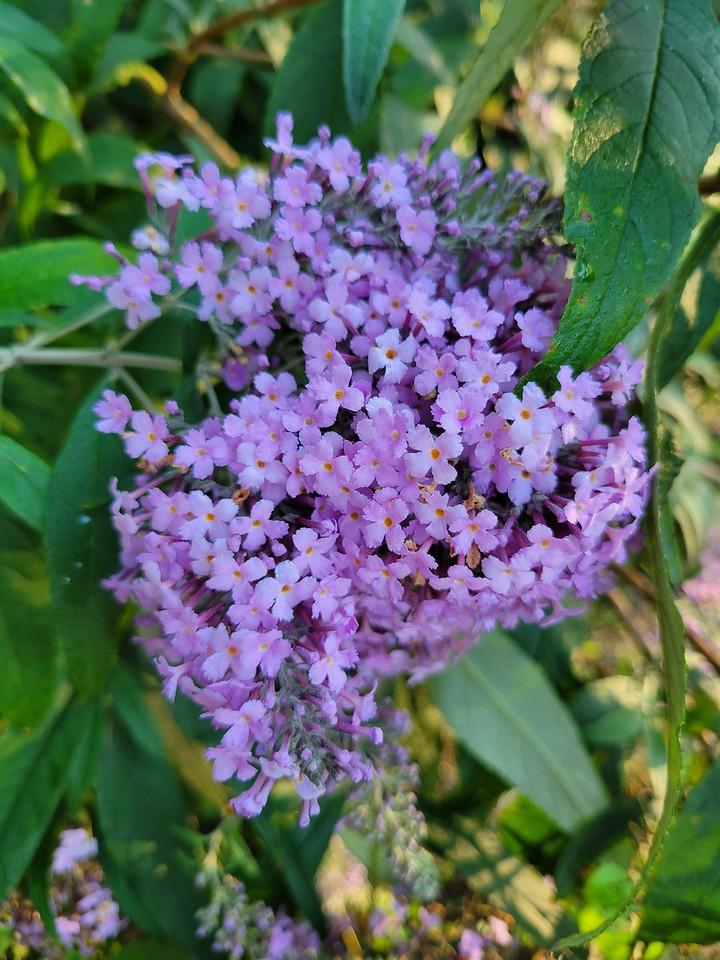 WEEK 316 - FLOWER - SHANNON BARDOLE-FOLEY