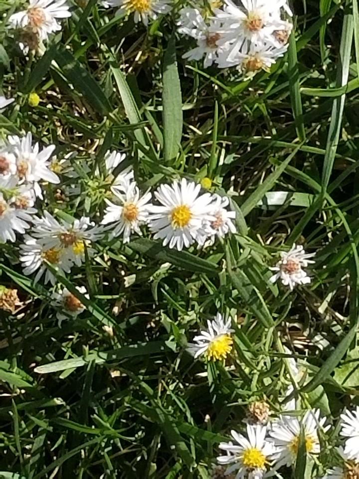 WEEK 316 - FLOWER - BILL WENTWORTH