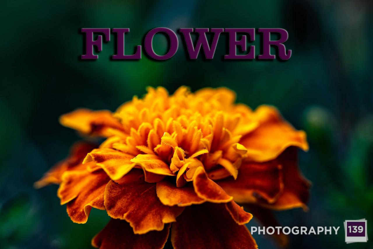 WEEK 316 - FLOWER