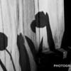 WEEK 292 -  SHADOWS - CHRISTOPHER D. BENNETT