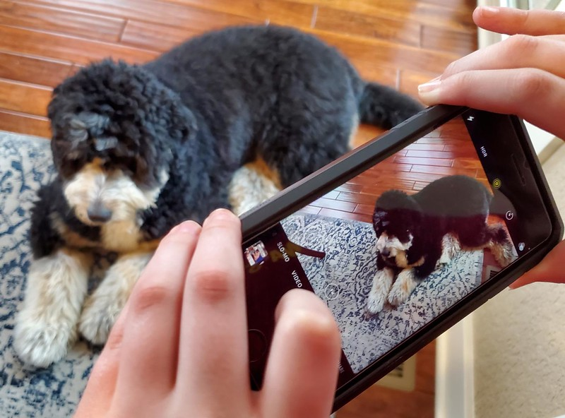 WEEK 287 - PICTURE IN PICTURE - JEN ENSLEY-GORSHE