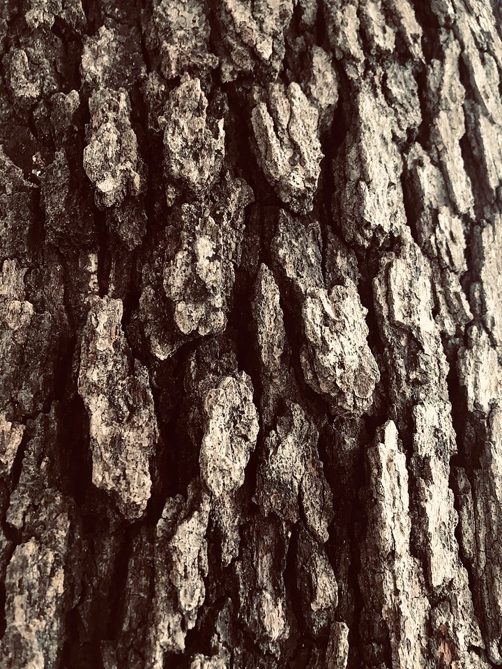 WEEK 269 - TREE - MONICA HENNING