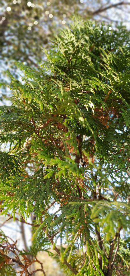 WEEK 269 - TREE - TAMARA PETERSON