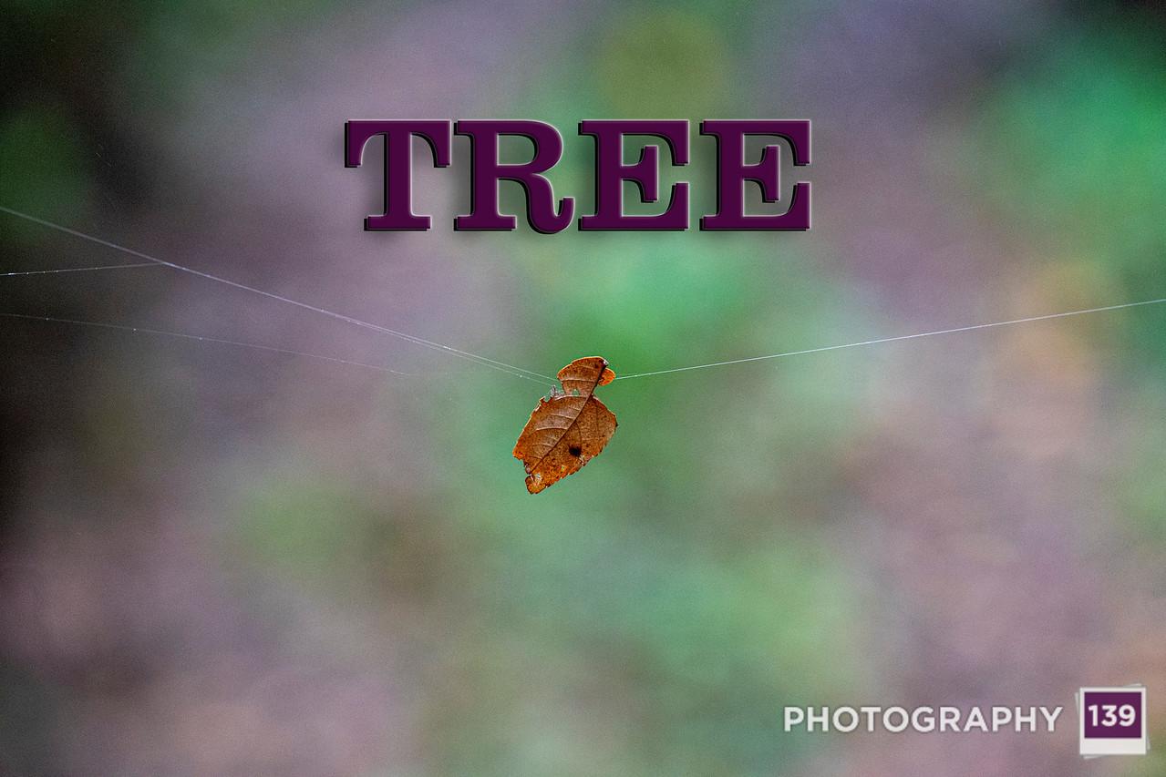 WEEK 269 -TREE