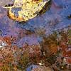 WEEK 261 - WATER - TAMARA PETERSON