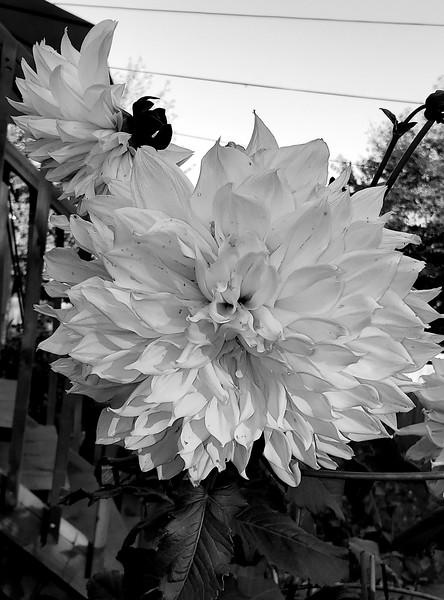 WEEK 266 - BLACK AND WHITE - TAMARA PETERSON