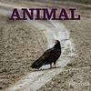 WEEK 267 - ANIMAL