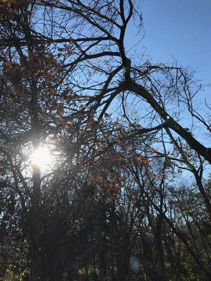 WEEK 269 - TREE - KIO DETTMAN