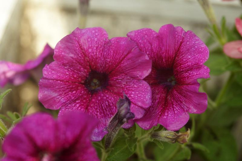 FLOWER - LOSER