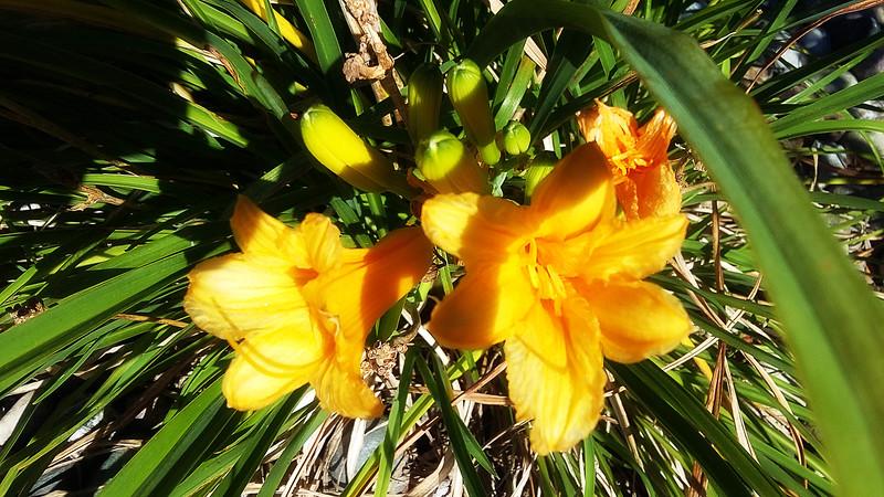 WEEK 45 - FLOWER - MIKE VEST 2
