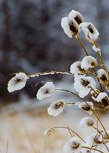 Winter Scenes & Botanicals